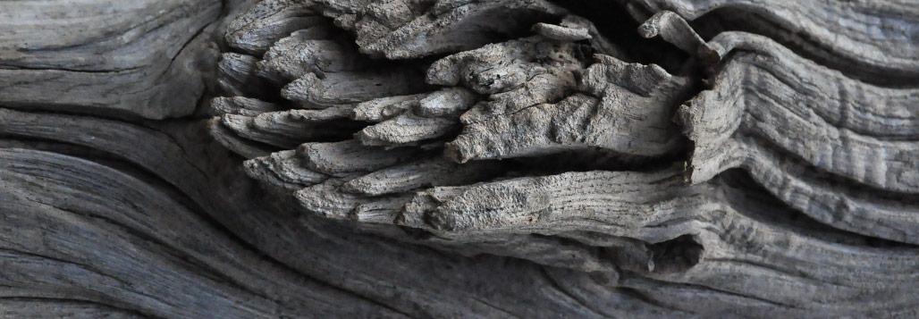 tronco di legno naturale