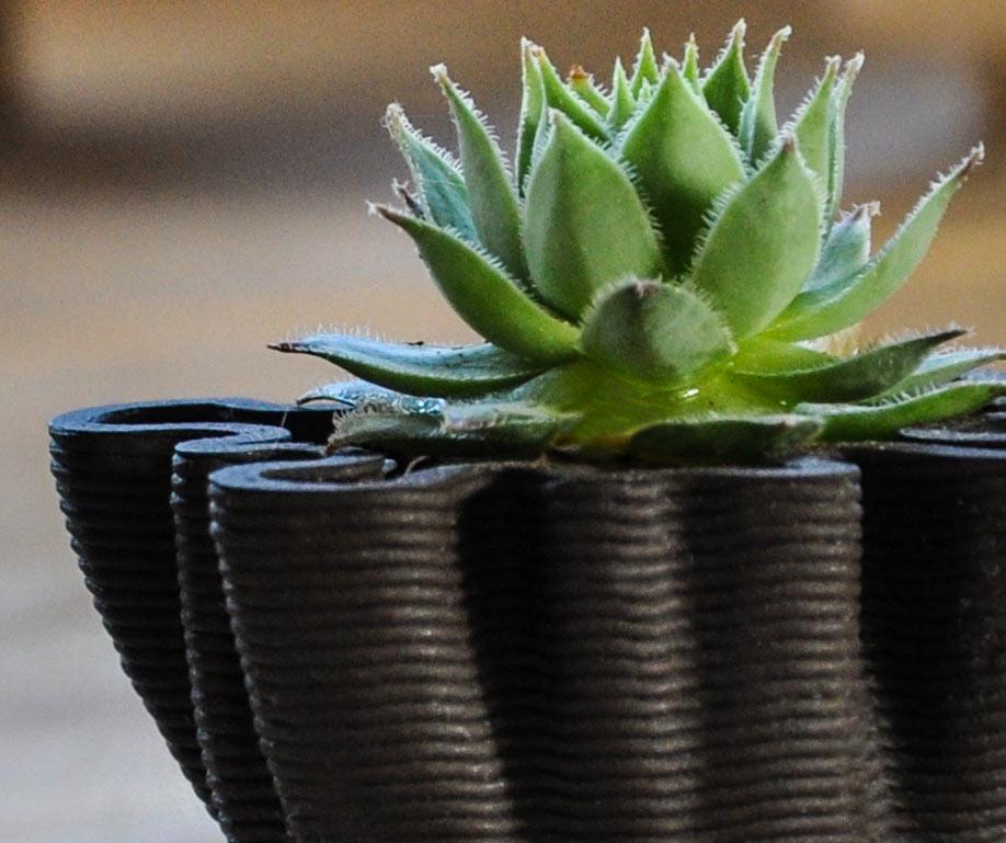 Vasini in stampa 3d per piante grasse livyng ecodesign for Livyng ecodesign